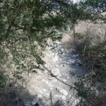 敷地内を流れる水無川の様子02