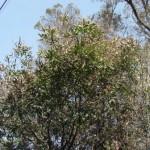 公社敷地内の樹木