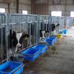 札立原牧場の牛たちの様子01