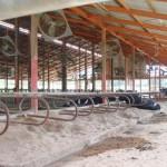 公社牛導入前の牛舎の様子01